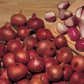 أخصائى تغذية: تناول البصل يخفض الكولسترول ويحمى القلب