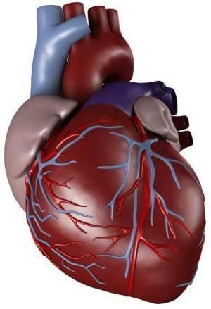 منظمة الصحة العالمية: 36 مليون مصرى معرضين للإصابة بأمراض القلب